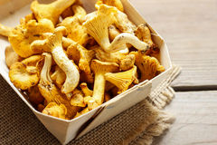 Cantharellus cibarius. Mushrooms in basket. Stock Photography