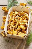Cantharellus cibarius. Mushrooms in basket. Royalty Free Stock Photo