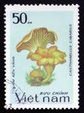Cantharellus cibarius, Reihe, circa 1983 Lizenzfreie Stockfotografie
