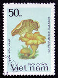 Cantharellus cibarius, series, circa 1983. MOSCOW, RUSSIA - FEBRUARY 12, 2017: A stamp printed in Vietnam shows Cantharellus cibarius, series, circa 1983 Royalty Free Stock Photography