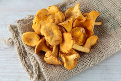Cantharellus mushrooms Royalty Free Stock Photos