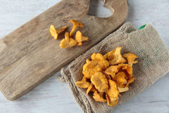 Cantharellus mushrooms Stock Photos