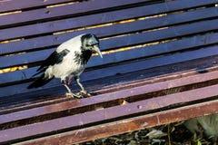 Canti su un banco di parco, fine su Immagini Stock Libere da Diritti