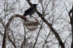 Canti su una lanterna arrugginita su un fondo degli alberi asciutti Fotografia Stock