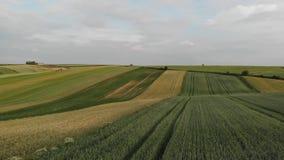 Cantidad aérea con vuelo sobre campo agrícola almacen de video