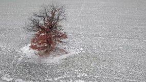 Cantidad aérea de la órbita del árbol del invierno metrajes