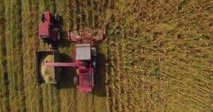 Cantidad aérea de la cosecha de maíz con la cosechadora y del tractor en un fieldon un campo almacen de metraje de vídeo