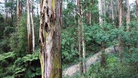 Cantidad aérea de un árbol alto en selva tropical almacen de metraje de vídeo