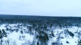 Cantidad aérea del bosque del invierno almacen de metraje de vídeo
