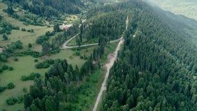 Cantidad aérea del bosque del pino metrajes