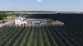 Cantidad aérea del manzanar y de una reserva de agua masiva, 4k almacen de metraje de vídeo