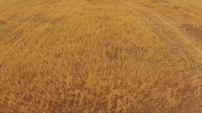 Cantidad aérea del silo en granja rural almacen de metraje de vídeo