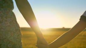 Cantidad cercana de manos en campo del trigo o del centeno con puesta del sol en madre e hija del fondo con la tenencia larga del almacen de metraje de vídeo