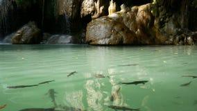 Cantidad de los pescados que nadan debajo del agua alrededor de la cascada de Erawan, atracción turística famosa popular en Kanch almacen de metraje de vídeo