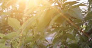 Cantidad de madera verde de la luz del sol de la naturaleza Hola concepto del verano almacen de video