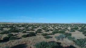 Cantidad del abejón del Kalahari almacen de video