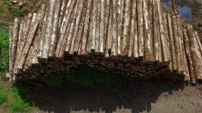 Cantidad del abejón para arriba llenado del bosque almacen de metraje de vídeo