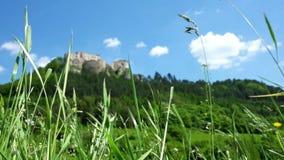 Cantidad del día ventoso: la hierba tiembla en un campo con vistas a castillo mitad-destruido metrajes