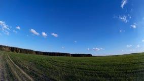 Cantidad del fondo de la naturaleza Campo verde con el cielo azul y las nubes móviles almacen de metraje de vídeo