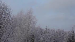 Cantidad del hd de la nieve del bosque del invierno almacen de video