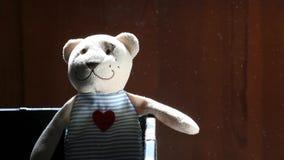 Cantidad del hd del polvo del oso del juguete de las lanas metrajes