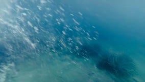 Cantidad del POV de la cámara lenta del hombre joven que salta del pontón en el mar y que se zambulle bajo el agua almacen de video