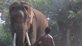 Cantidad, elefante de Asia almacen de video