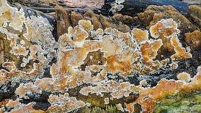 Cantidad estática fungosa, videoclip de la naturaleza HD metrajes