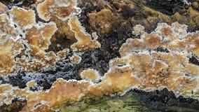 Cantidad fungosa de la cacerola, videoclip de la naturaleza HD almacen de metraje de vídeo