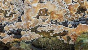 Cantidad fungosa de la cacerola, videoclip de la naturaleza HD metrajes