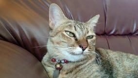 Cantidad - gato que se sienta en el sofá almacen de video