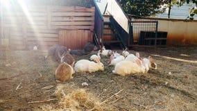 cantidad 4k de las porciones de conejos nacionales y de pájaros detrás de la cerca en granja metrajes