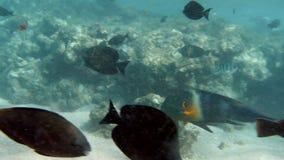 cantidad 4k del baj?o de pescados coloridos que nadan cerca del fil?n muerto en el Mar Rojo metrajes