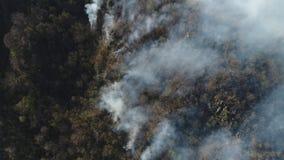 Cantidad móvil aérea del fuego que arde en el bosque metrajes