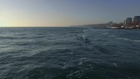 Cantidad Odessa Ukraine del abejón del Mar Negro metrajes