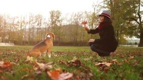 Cantidad otoñal de la cámara lenta: la señora en el sombrero domestica su beagle almacen de metraje de vídeo
