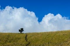 Cantigi och moln Royaltyfri Foto