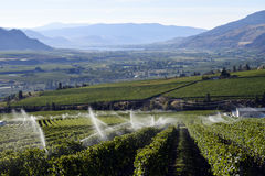 Cantina della vigna dello spruzzatore di irrigazione Fotografie Stock
