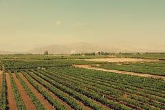 Cantina di Tacama, AIC, Perù Fotografia Stock Libera da Diritti