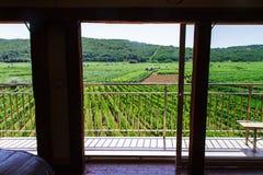 Cantina e vigne in Croazia Katinar, l'isola di Krk Immagini Stock Libere da Diritti