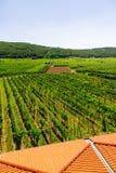 Cantina e vigne in Croazia Katinar, l'isola di Krk prospettiva Immagine Stock Libera da Diritti