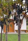 Cantina per vini in Austria immagine stock