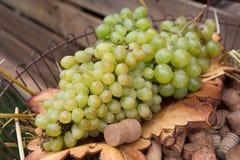 Cantina, raccolto dell'uva, mercato dell'alimento degli agricoltori Fotografia Stock