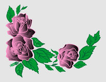 Canto abstrato das rosas Imagens de Stock