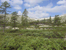 Canto alpino de Barguzinsky de los prados en el lago Baikal Imagen de archivo libre de regalías