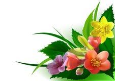 Canto colorido das flores Fotografia de Stock Royalty Free