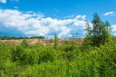 Canto de Sandy en un fondo del bosque verde y del cielo nublado Imágenes de archivo libres de regalías