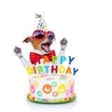 Canto del cane di buon compleanno Fotografie Stock Libere da Diritti