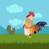 Canto del gallo del pollo Immagini Stock