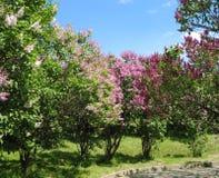 Canto do parque na mola Árvores de florescência ensolarado fotografia de stock royalty free